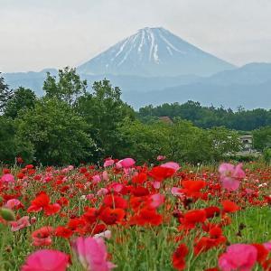 富士山とポピー