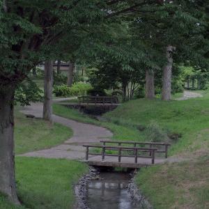 欅林を流れる小川