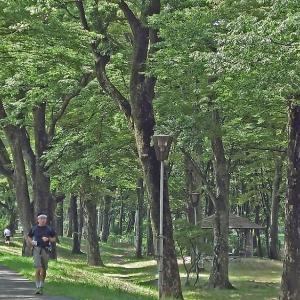 欅林(けやきばやし)を走る