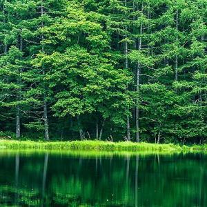 夏を待ちわびる湖面