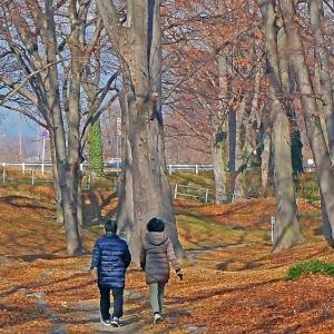 冬枯れの欅林を散策