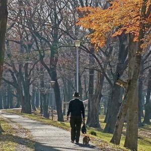欅林をお散歩