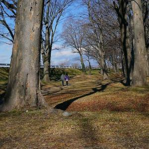 欅林を歩く