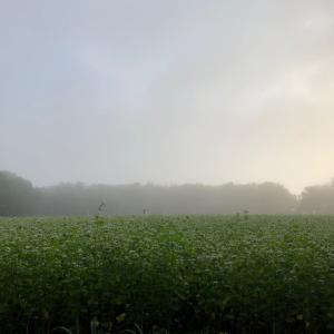 霧、つつみ