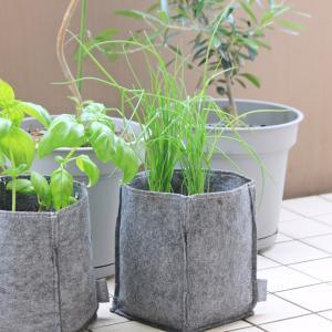家庭菜園はじめました。不織布のプランター、めちゃ便利。