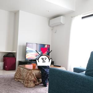 1y0m13d ★新しいお家