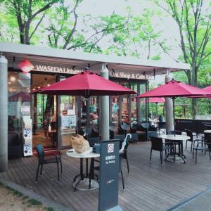 早稲田でオシャレなカフェ見つけた 天気の良い日のウッドデッキテラスは最高 Unicafe 125