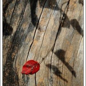 枯れ葉の追憶