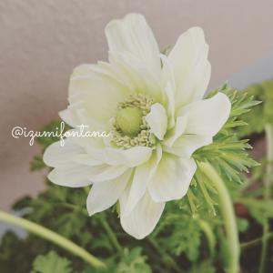 春先のお花の記録