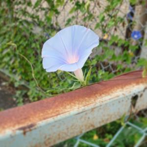 さりゆく夏の花たち