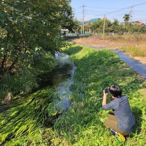 天然記念物「元荒川ムサシトミヨ生息地」の埼玉県担当者視察