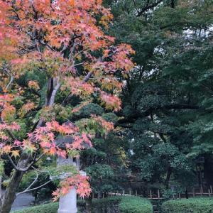 熊谷市名勝「星溪園」の紅葉状況