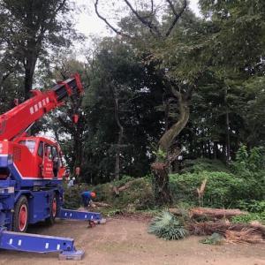 埼玉県指定記念物史跡「別府城跡」における樹木管理事業