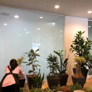 観葉植物コーディネート