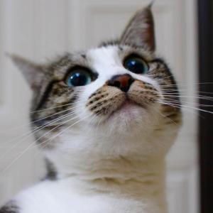 『ネコをかぶった ちゃ〜?』