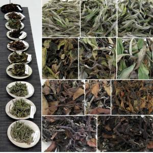 マニアな中国茶会【白いお茶の飲み比べ】枚方教室