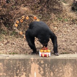 久しぶりのかみね動物園