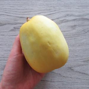 黄石瓜(こうせきうり)