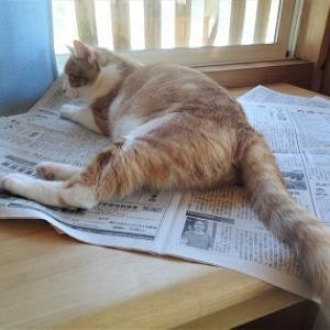 猫部屋は今日も平和にゃり♪