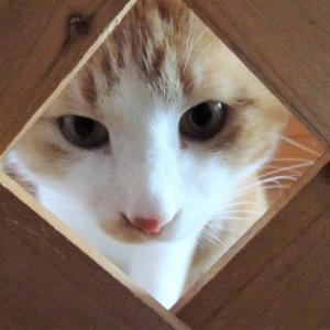 どうしても猫部屋に入りたいぽんちゃんです(-_-)