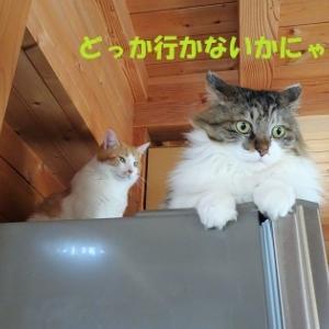 冷蔵庫の上でもめないで(-_-)