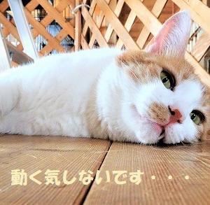ニャー子さんの背中カキカキに貢献しました(^^;