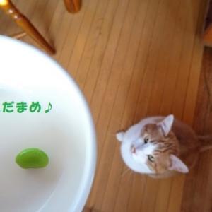 ぽんちゃんと緑のコロコロ♪