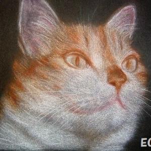 サスケの猫時間