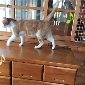 ぽんちゃん猫部屋に放たれる。