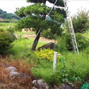 うちの庭よぉ~