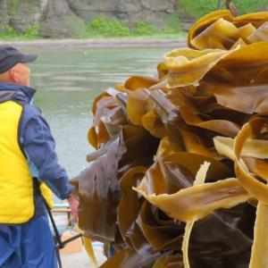昆布漁始まる