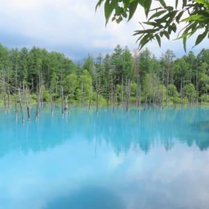 青い池・・美瑛