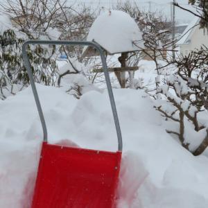 大雪・餌台は大賑わい