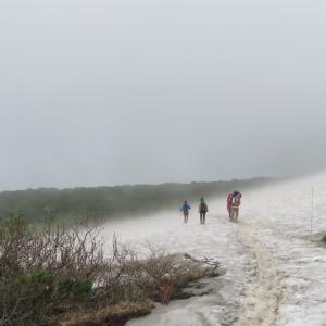大雪山系・赤岳コマクサ
