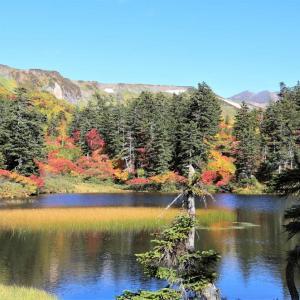 大雪山系紅葉 緑沼