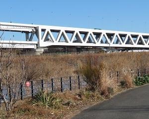 「新横浜公園」の遊水池にパンダガモが!!