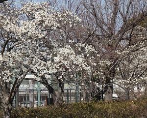 鶴見川土手の周辺で春の花を見つけに!!