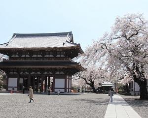「池上本門寺」境内の満開の桜にうっとり!!