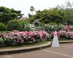 「港の見える丘公園」のバラのアーチがとっても綺麗!!