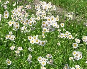 鶴見川土手付近の公園には初夏の花がいっぱい!!