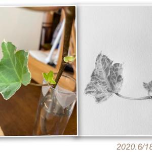 5か月ぶりの植物画レッスンで東京へ