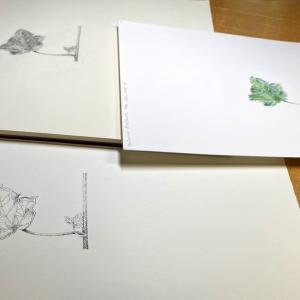 植物画習ってます