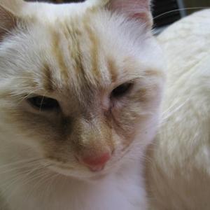 尻と膝との間には!今日も可愛い猫がいる!!