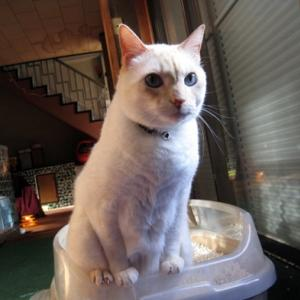 機嫌の良い猫、悪い猫!ジュンのせくしぃポーズ!!