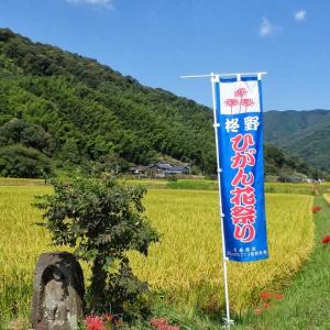 柊野彼岸花祭りの写真をPanoramioに公開しました