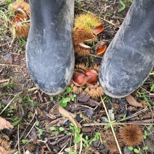 秋の畑と栗拾い、稲藁…。