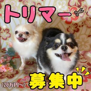スタッフ募集〜(再更新)