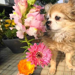 庭の花を♡