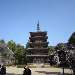 2015年3月京都7 醍醐寺7 五重塔