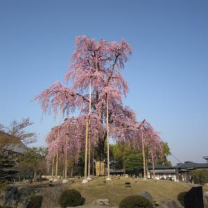 2015年3月京都20 東寺6